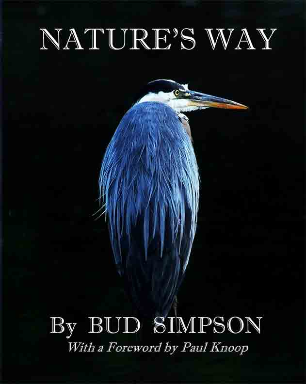 Nature's Way: The Great Blue Heron by Bud Simpson